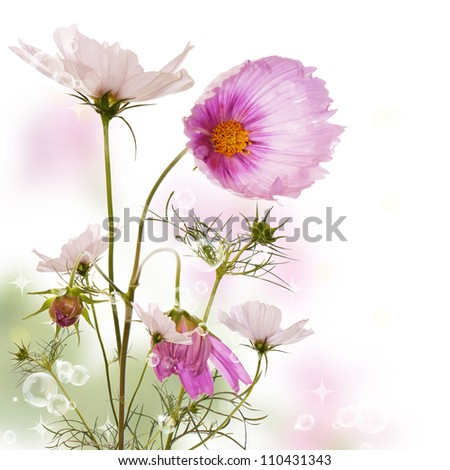 Beautiful garden flowers. Flora design - stock photo