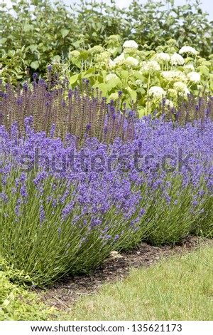 Beautiful garden in spring. - stock photo