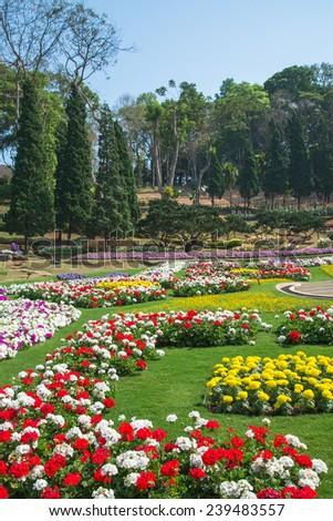 Beautiful garden in spring , Doi Tung ,Thailand  - stock photo
