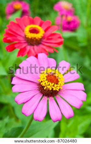 beautiful garden of colorful flowers in spring - stock photo