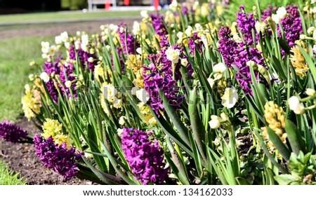 Beautiful garden of purple white and yellow flowers - stock photo