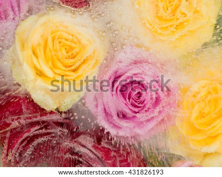beautiful gentle abstraction of flowers multicolored roses frozen in a transparent clear water with air bubbles in bright colors - stock photo