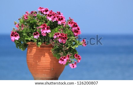 Beautiful geranium flowers in a pot in front of the ocean - stock photo