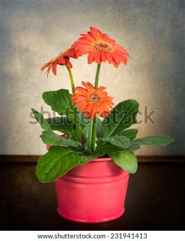 Beautiful gerbera flower on textured background - stock photo