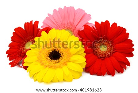 beautiful gerbera flowers isolated on white background - stock photo
