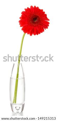 Beautiful gerbera in vase isolated on white - stock photo