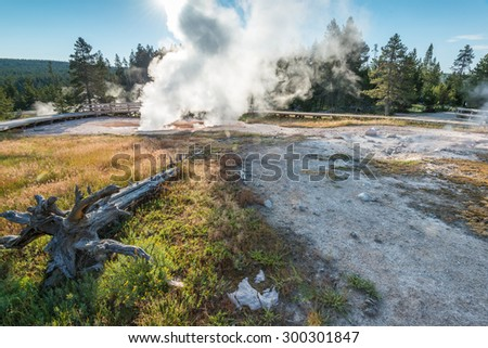 beautiful geyser in yellowstone national park ,Wyoming,usa. - stock photo