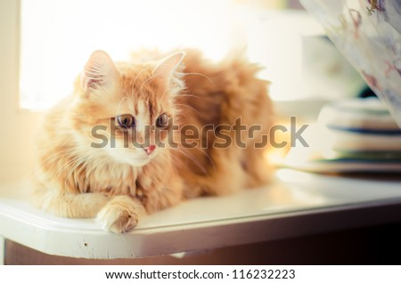 beautiful ginger cat sitting on a window on a white background - stock photo