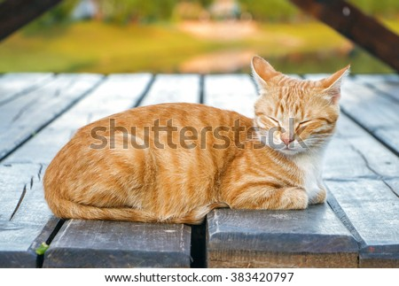 Beautiful ginger tabby cat with screwed-up eyes is lying on the wooden floor. Orange cat is sleeping on the open air, outside, on blue green background - stock photo