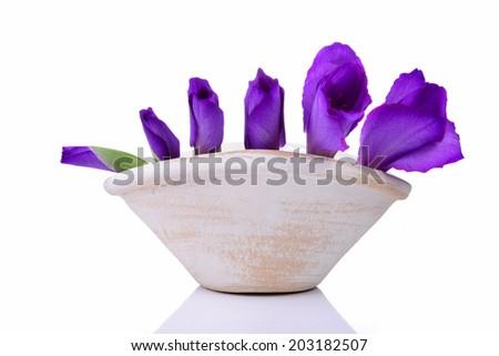 Beautiful gladiolus flower on vase on white background - stock photo