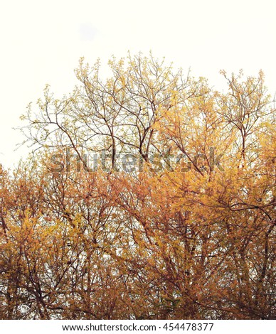 Beautiful golden forest,Soft focus and vintage color toned. - stock photo