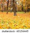 beautiful golden orchard - stock photo