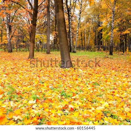 beautiful golden orchard - stock photo