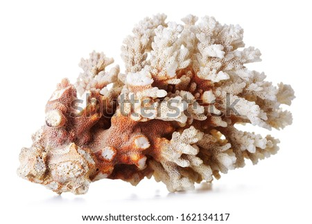 beautiful gray coral, isolated on white background - stock photo