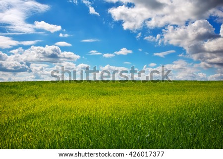 Beautiful green field and blue sky.    - stock photo