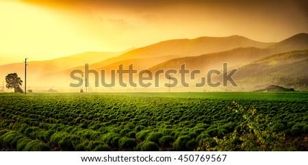 Beautiful green field in mist at sunset. - stock photo