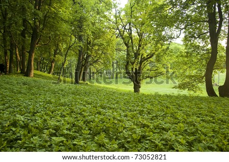 Beautiful green forest at morning - stock photo