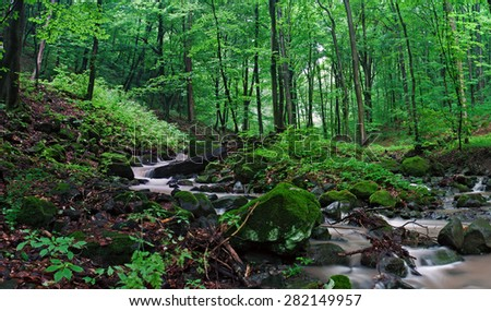 beautiful green forest near with the creek - stock photo