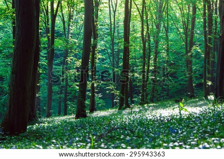 beautiful green forest with sunlight - stock photo