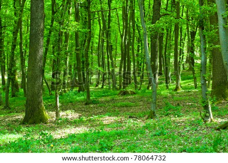 Beautiful green forest with sunlight shining through the branches. - stock photo