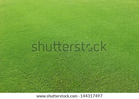 Beautiful green grass on a golf course - stock photo