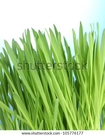 beautiful green grass on blue background - stock photo