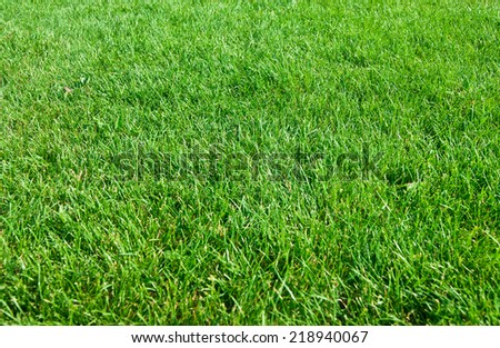 Beautiful green grass texture from a field - stock photo
