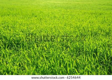 Beautiful green lawn freshly mowed - stock photo