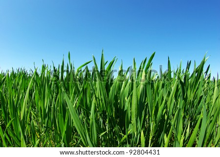 Beautiful green lawn isolated on sky - stock photo
