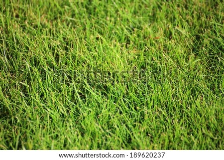 Beautiful green lawns perfectly cut for background - stock photo