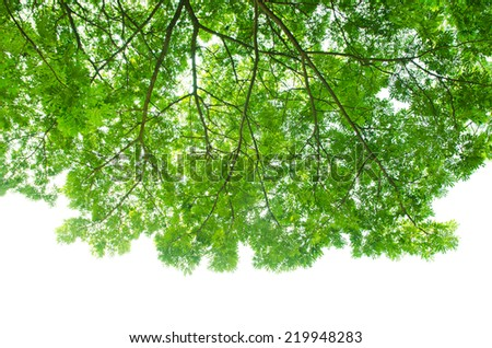 Beautiful Green leaves on white background - stock photo