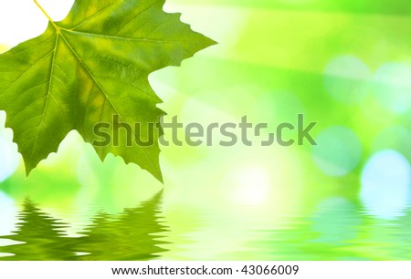 Beautiful green leaves with green background and reflection in spring - stock photo