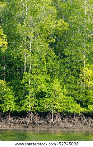 beautiful green mangrove trees with reflection - stock photo