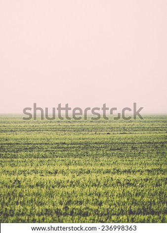 beautiful green meadow in heavy mist with lonely trees - retro, vintage style look - stock photo