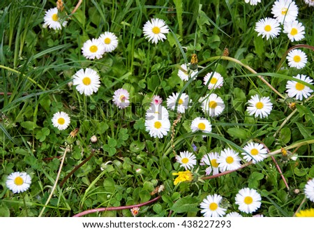 Beautiful green meadow with nice chamomile. Wonderful rural landscape. Amazing grassland with wildflowers. Summer countryside environment and village beauty. Nice photo of herbs & chamomile - stock photo
