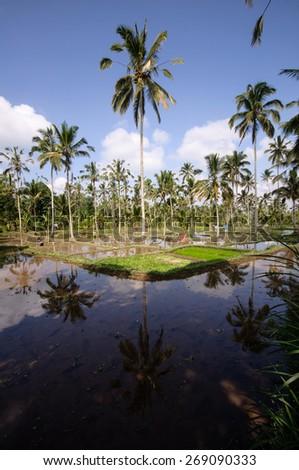 Beautiful green terrace paddy fields on Bali, Indonesia - stock photo