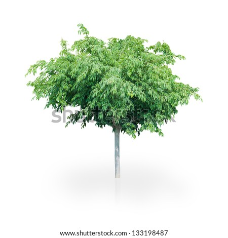 Beautiful Green Tree Isolated On A White Background - stock photo