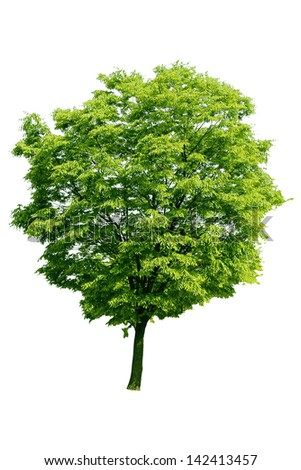 Beautiful green tree on a white background - stock photo