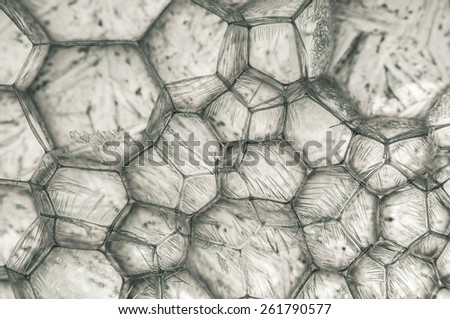 Beautiful grey and white ice crystal - stock photo