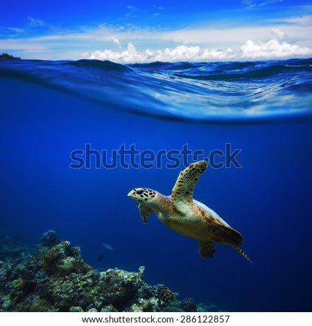 Beautiful Half Water Waterscape With Clouds in Sky Postcard. Maldivian Sea Turtle Floating Up And Over Coral reef. Loggerhead in wild nature habitat - stock photo