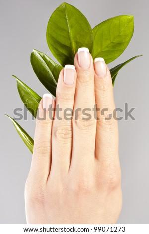 Beautiful hand girl with green leaves. studio - stock photo