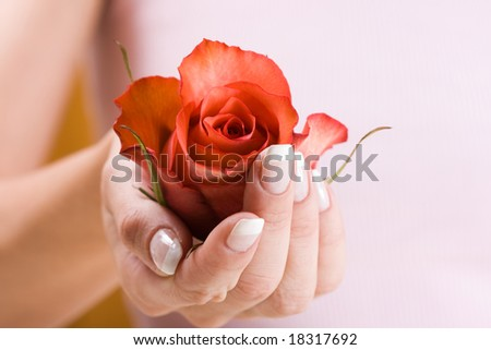 Beautiful hand with French manicure. Soft-focused, low DOF, focus on rose - stock photo