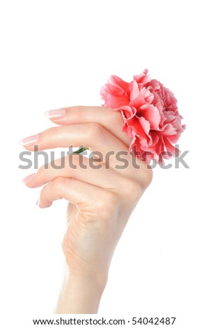 Beautiful hand with perfect french manicure on treated nails holding carnation flower. isolated on white background - stock photo