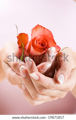 Beautiful hands with French manicure. Soft-focused, low DOF, focus on rose - stock photo