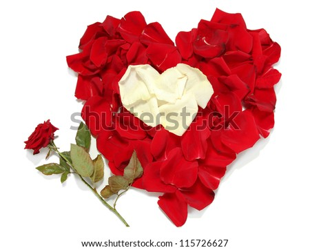 Beautiful heart of red and white rose petals with red rose isolated on white - stock photo