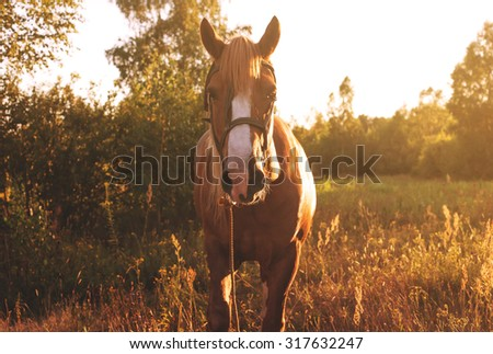 Beautiful horse grazing at sunset with sunlight on background - stock photo