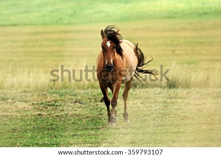 Beautiful horse on pasture - stock photo