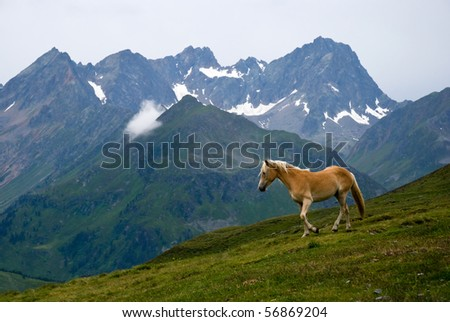 Beautiful Horse on the alpine pasture with some peaks in the background - stock photo