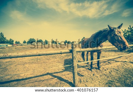 Beautiful horse on the ranch or farm behind wooden fence, beautiful countryside vintage landscape - stock photo