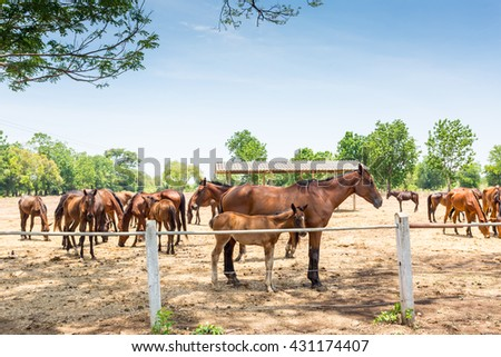 Beautiful horse outdoor on meadow. horse from farm. Horse with interesting color. Lovely and cute horse. Horse breed for western or jumping sport and training. Animal shot capturing horse. - stock photo